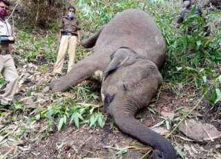 مأساة.. صاعقة برق تقتل 18 فيلا في ثوان
